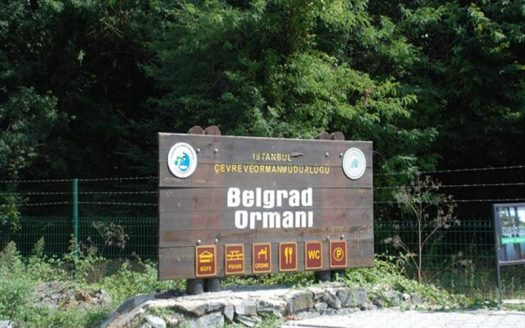 Belgrad Forest Istanbul 2 image