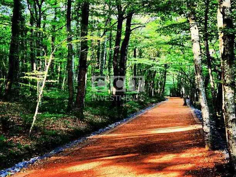 Belgrad Forest Istanbul image
