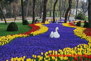 Tulip-Festival-3-photo